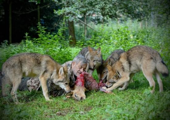 Werner-Freund-wolves3-550x391